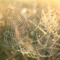 Autumn spider web