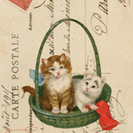 Collage with cats in a basket
