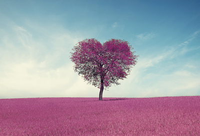 Lavender heart shaped tree