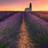 Morning in Provence