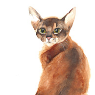 Abyssinian cat - watercolor