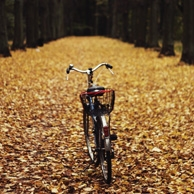 Agata Dobrzańska - Autumn bike