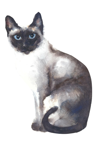 Siamese cat - watercolor
