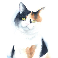 Tricolor cat - watercolor