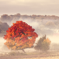 Poland - Love to be here... - Pomeranian - Autumn Tree
