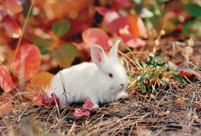 Autumn white bunny
