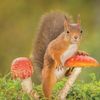Squirrel and toadstools