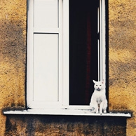 White cat on a windowsill
