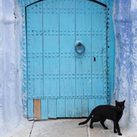 Blue door & black cat