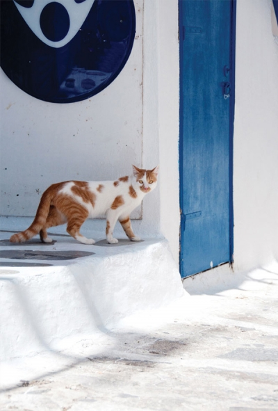 Greek ginger cat