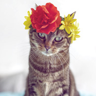 Cute cat with flower crown