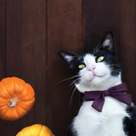 Cat and pumpkins
