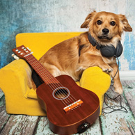 Dog with a guitar