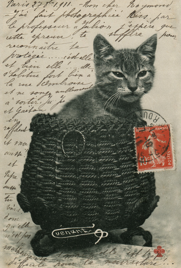 Cat in the basket / Retro / Postcards / Postallove