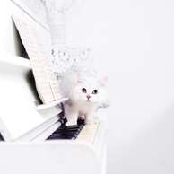 White cat on the piano