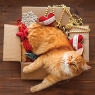 Cat in a box with Christmas decorations