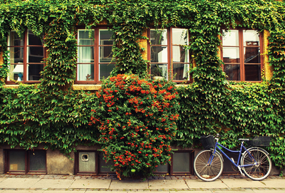 Blue bike & ivy