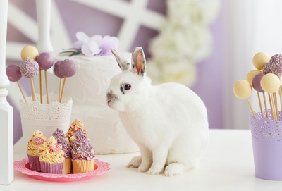 White rabbit with cupcakes and lollipops