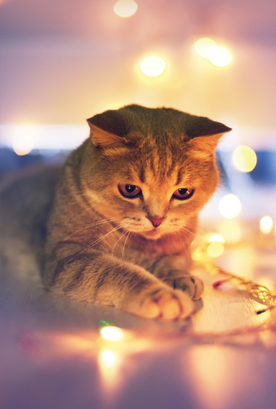 Kitty and Christmas tree lights