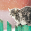Cat on a green fence