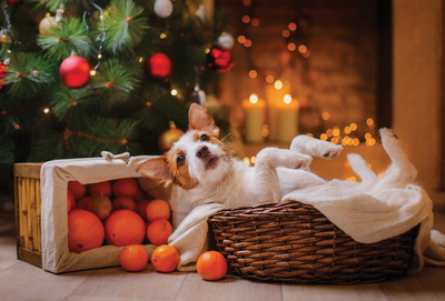Dog under the christmas tree